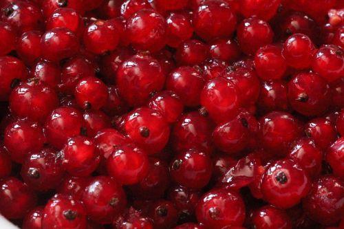 fruit currants sour
