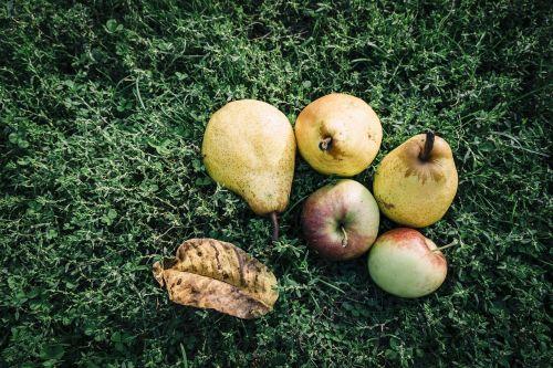 vaisiai,obuolys,kriaušė,lauke,veja,desertas,skanus,apartamentai,vaisių sodas,iškylai,derlius,pasėlių,žalias