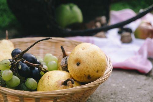 fruit basket harvest