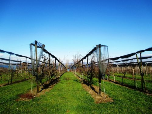 fruit orchards orchard