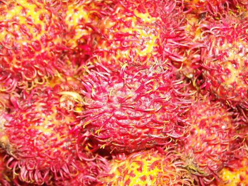 fruit rambutan red