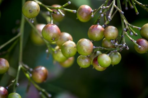 fruit tropical fruit nature
