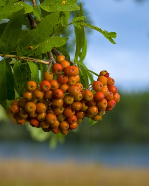 fruit mat berry