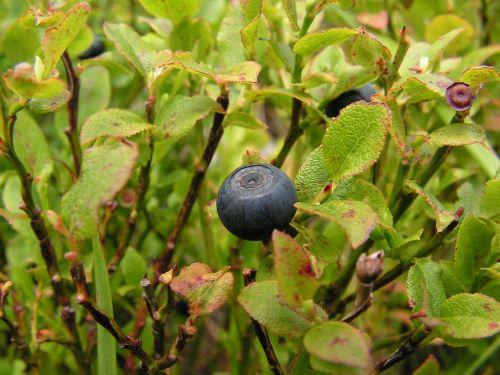 fruit nature eating