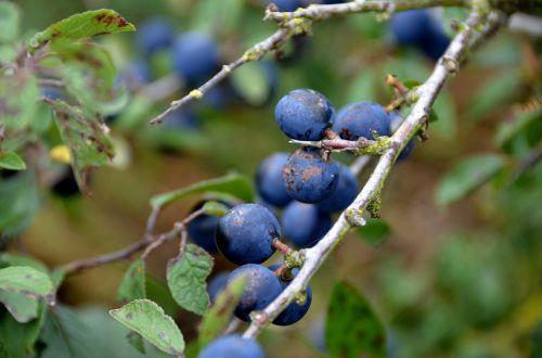 fruit nature plant