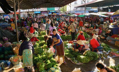 fruit vegetable homegrown