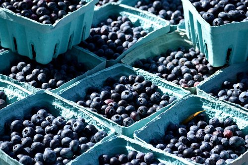 fruit  blueberry  berry