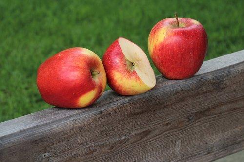 fruit  garden  apples