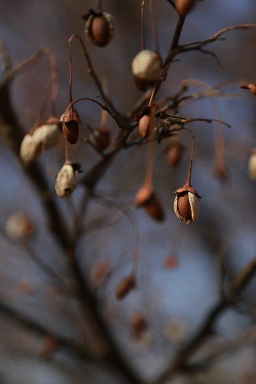 fruit  autumn  nature