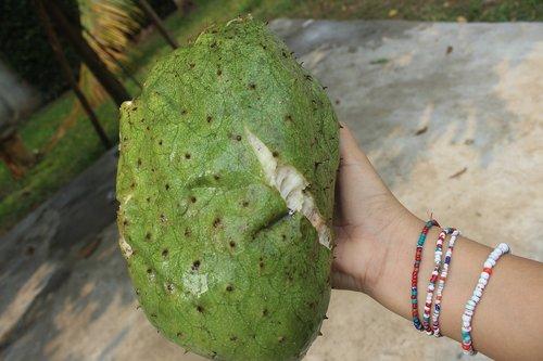 fruit  guanabana  healthy