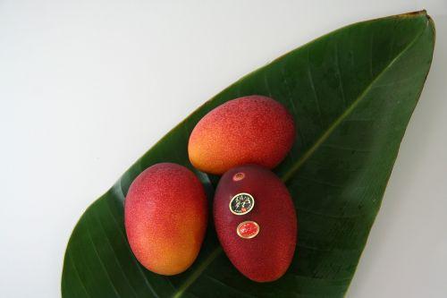 fruit mango egg of the sun