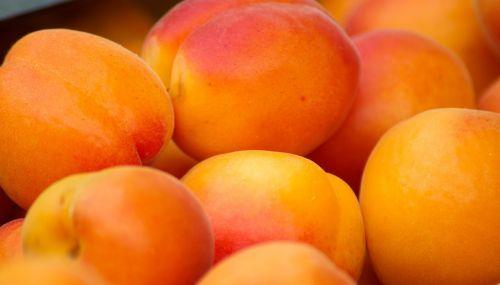 fruit apricots provence
