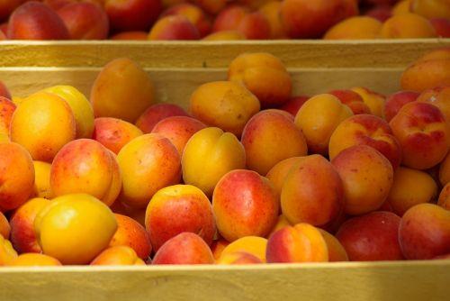 fruit market apricots