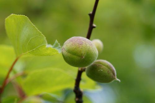 fruit set fruits fruit