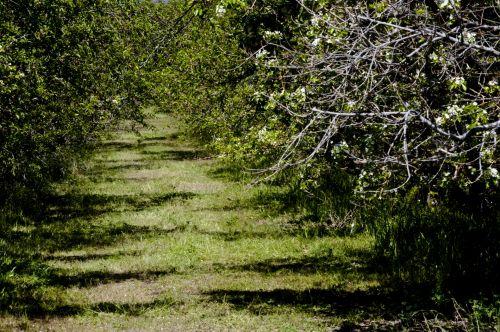 Fruit Tree Grove