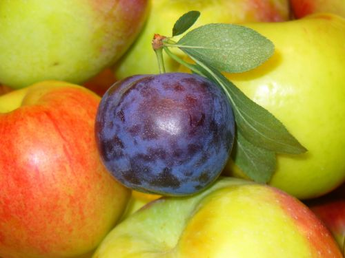 fruits prune apples