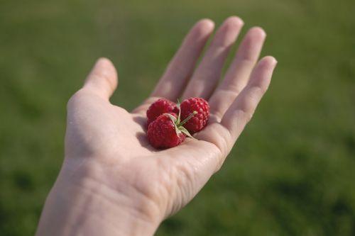 fruits berries raspberries