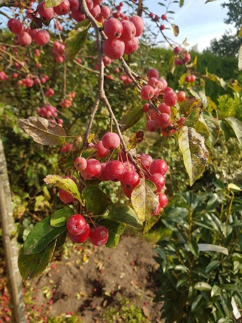 fruity  red fruit  herfstbloeier