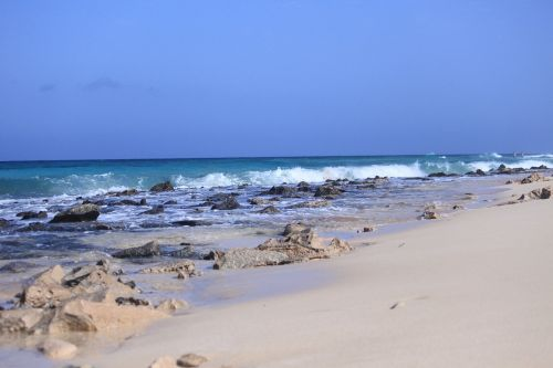 fuerteventura canary islands canary