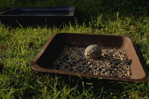fuglemad seeds cores