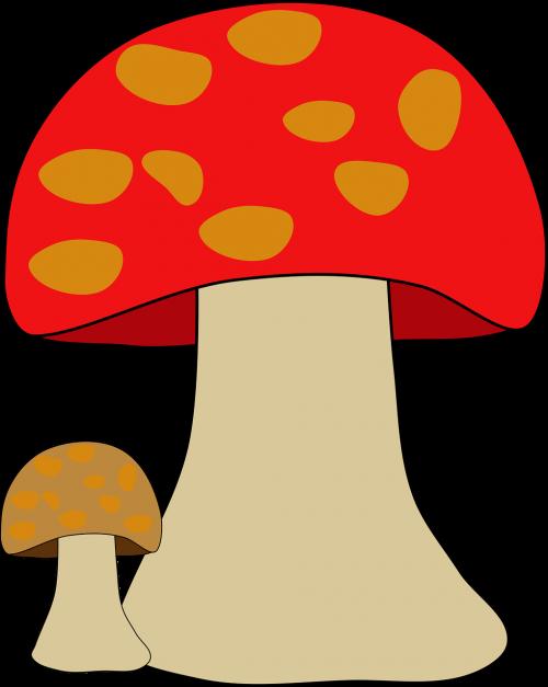 fungi fungus mushroom