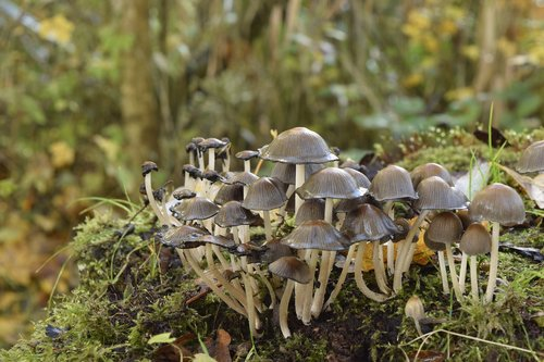 fungi  nature  mushroom