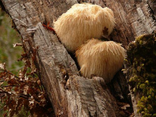 fungi fungus wood