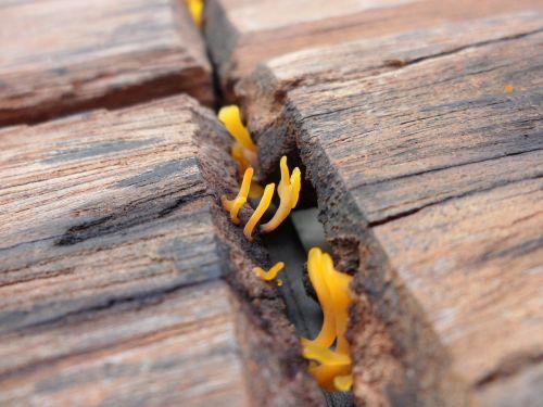 fungi wood fungus