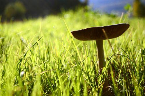 fungus green prato