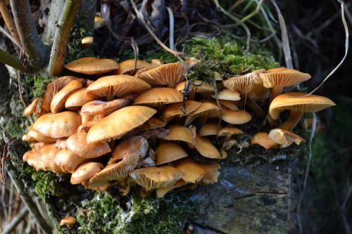 fungus mushroom fungi