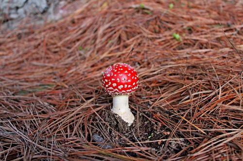 fungus forest mushroom