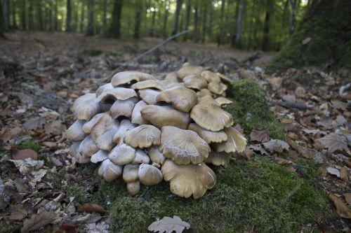 fungus red mushroom white