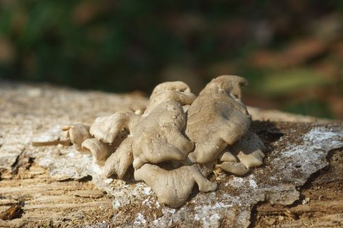 fungus stem trunk