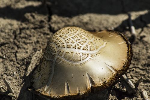 fungus  nature  poisonous mushroom
