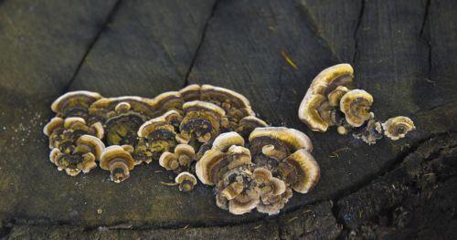Fungus Flowers