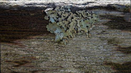 Fungus Pattern On Wood
