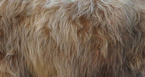 fur  animal  nature
