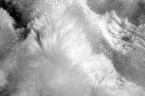 Fur Background 7