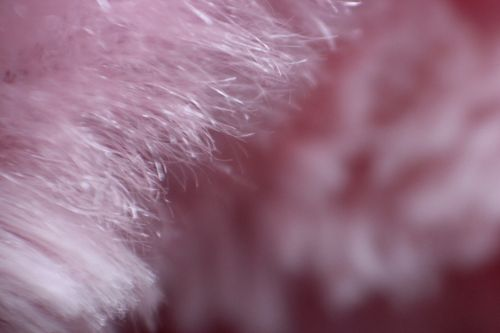 Fur Background 8