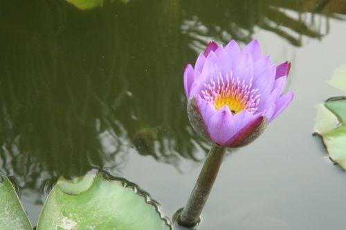 fuzhou lotus pond
