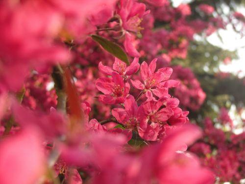 fuzzy flower spring