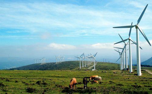 Galicia,vėjo malūnai,karvės,Prado,kraštovaizdis,ganyklos,gamta,vėjo malūnas,vėjo energija,vėjas,elektros energijos gamyba,atsinaujinanti energija,ekologija,dangus,kontrastas,kontrastas,fonas