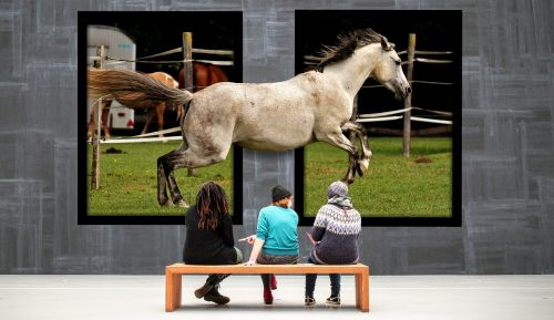 gallery horse galloping