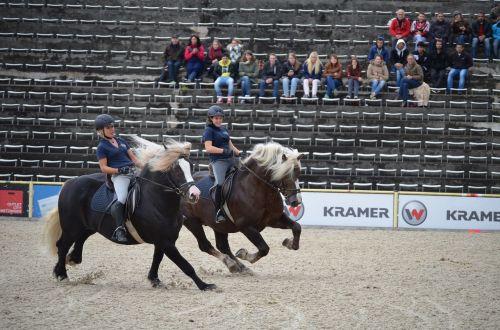 gallop stallion mane