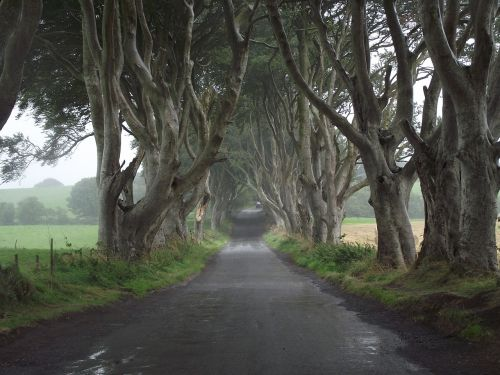 game of thrones ireland trees