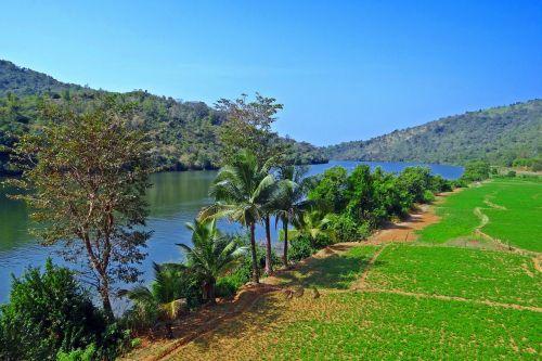 gangavali river tidal swell groundnut crop