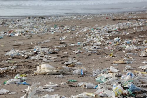 garbage environment beach