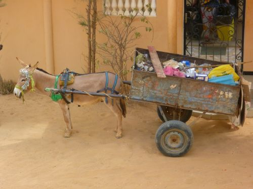 garbage transportation donkey