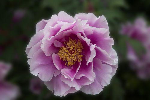 garden flower blossom