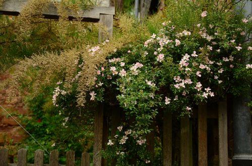 garden garden fence heck roses